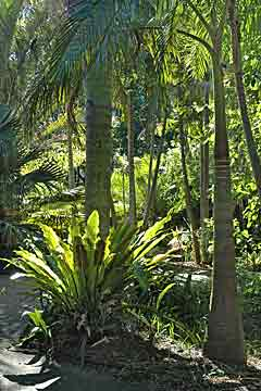 Birds nest fern and palms in the  tropical landscaped gardens